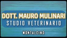 visite veterinarie, cura animali domestici, radiografie per animali