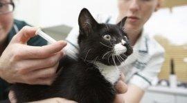 cura felini, vaccinazione felini, sterilizzazione felini