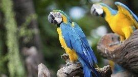 cura animali esotici, visite veterinarie su volatili, cure veterinarie per pappagalli