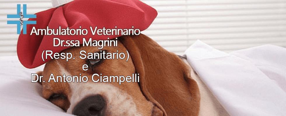 veterinario cure grosseto