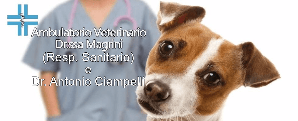 cure alternative veterinario grosseto