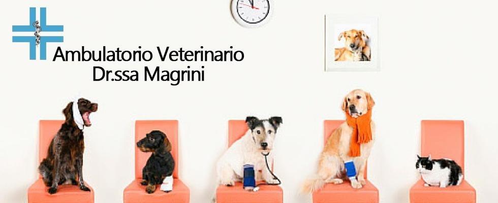 Dr.ssa Magrini Veterinario