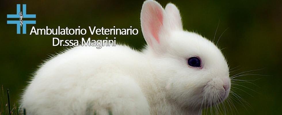 veterinario conigli grosseto