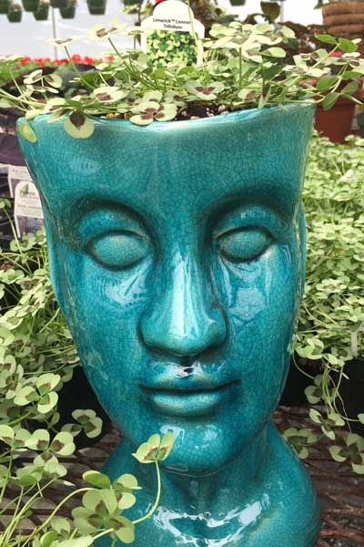face plant holder