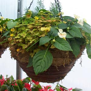 hanging basket container