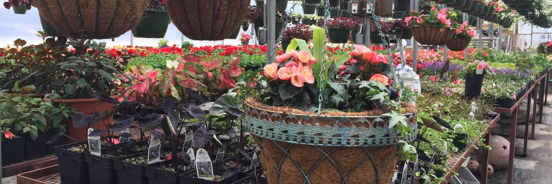 basket greenhouse