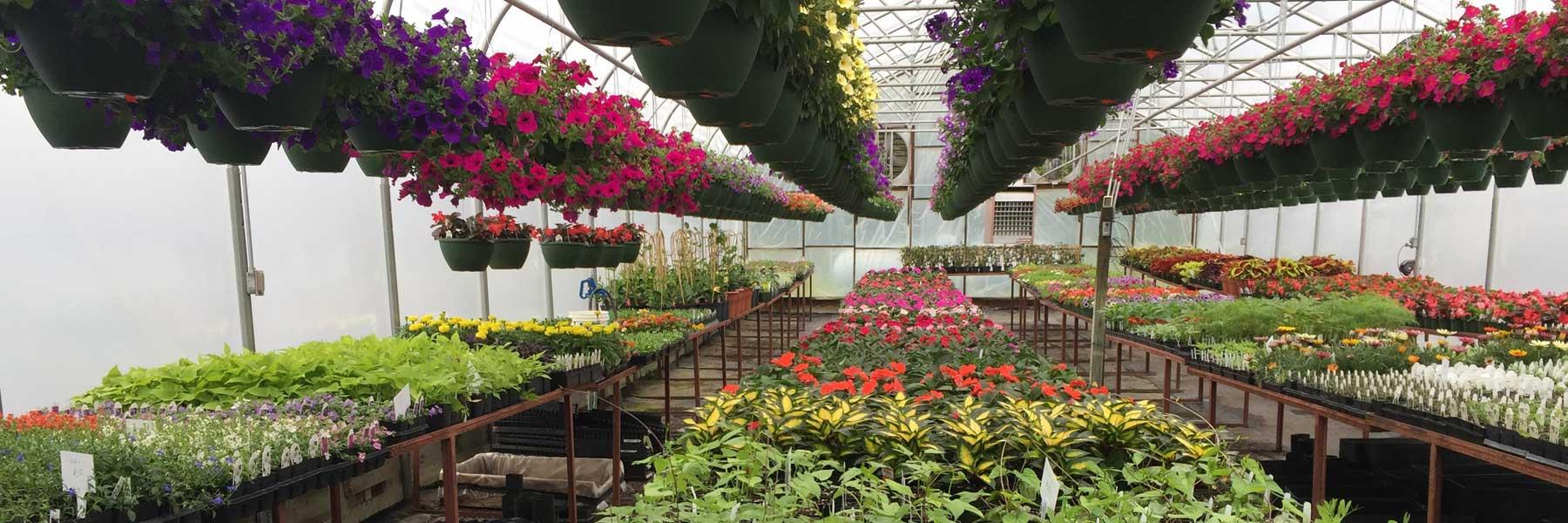 pisgah greenhouse