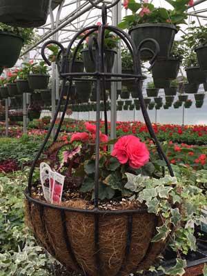 variety flower basket