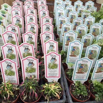 fairy plants