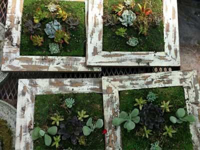 picture frame garden