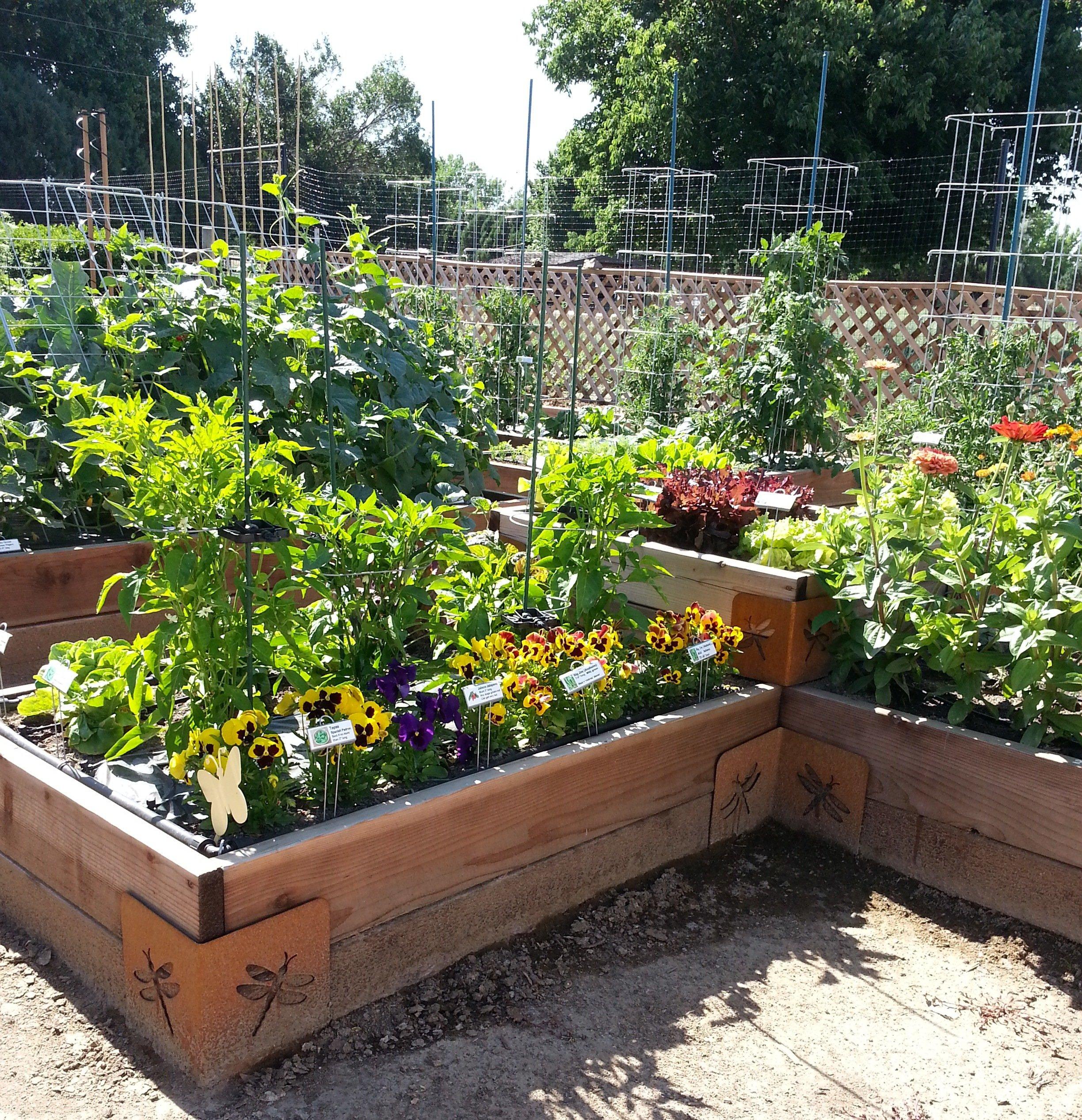 Build Your Garden