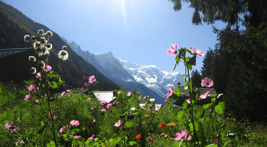 Summer flora in Chamonix