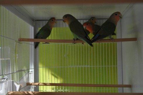 Vendita volatili e uccellini esotici