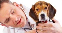 oscultazione torace cani