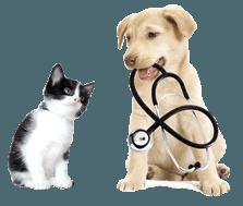 veterinario, clinica veterinaria, ambulatorio veterinario
