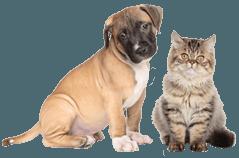 clinica veterinaria, veterinari, medici veterinari