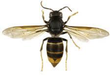 immagine di un ape con scritto Rome sulla sinistra