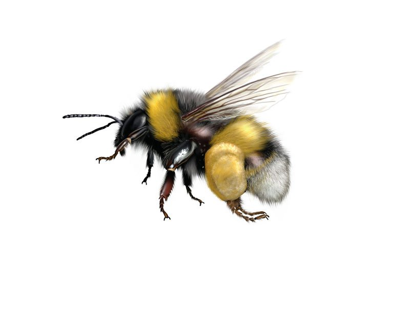 una vespa vista da vicino che sta sbattendo le ali