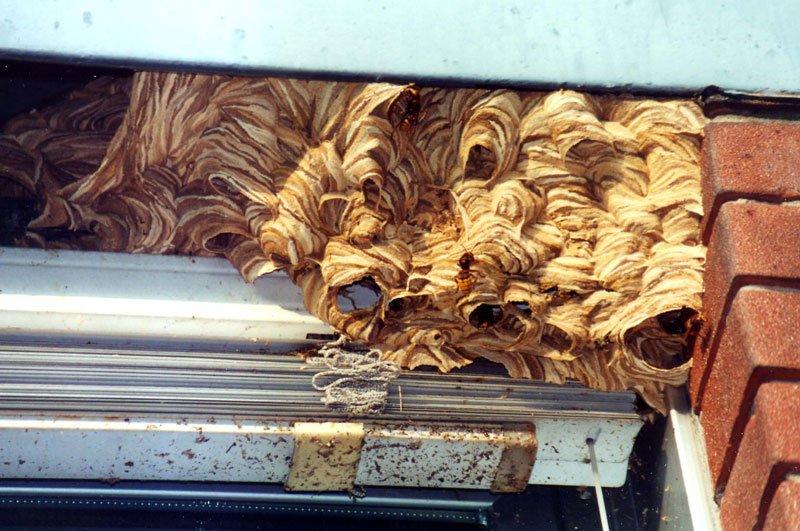 un nido di calabroni sopra a una finestra all'esterno di una casa