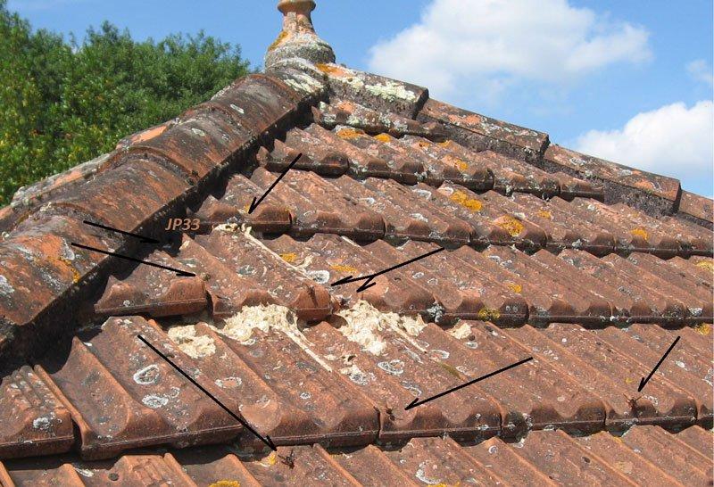 un nido di calabroni su un tetto di una casa