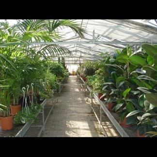 piante a foglia larga