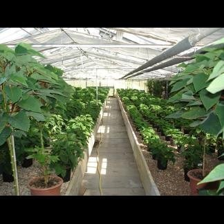 piante per ambienti esterni