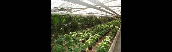 piante nane