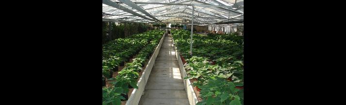 piante profumate