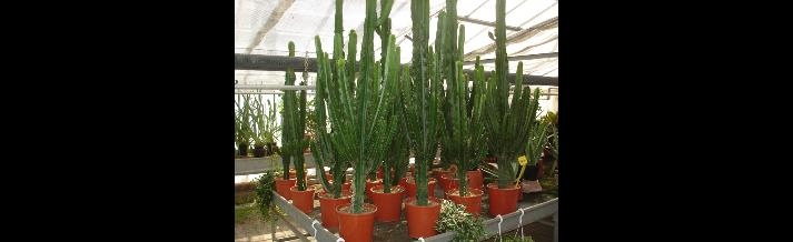 piante a foglia lunga