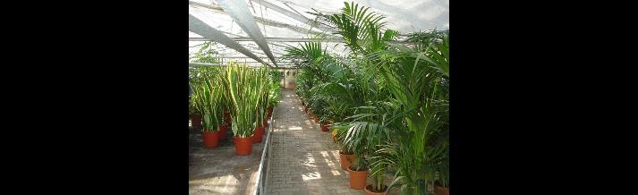 piante d