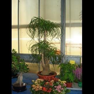 pianta acquatiche