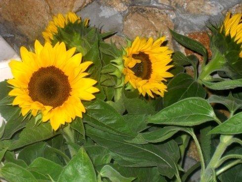 fiori recisi per cerimonie