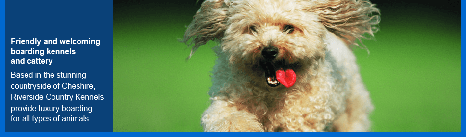 To get your dog groomed in Stockport call 0161 430 3616