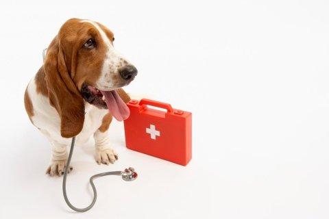 medicine per cani