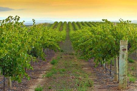linke vineyard services vineyard management