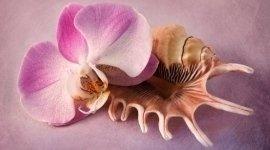 composizione fiori, conchiglie e fiori, composizione conchiglia
