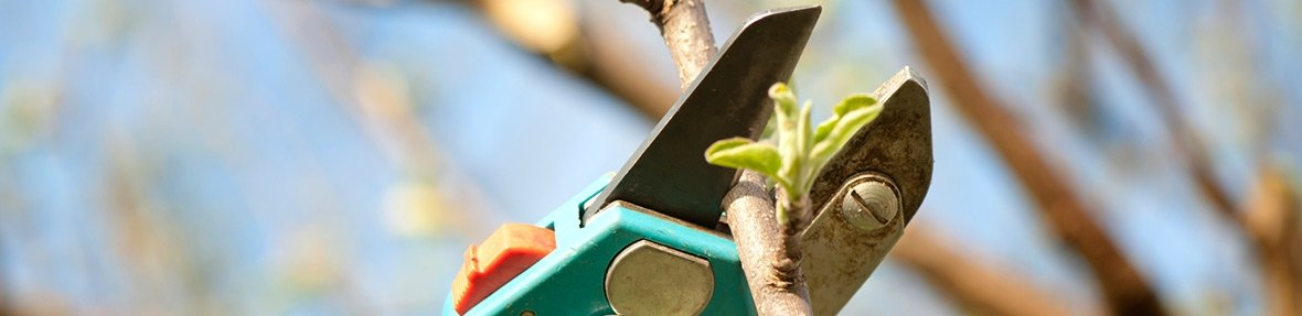 lucas tree services pruning