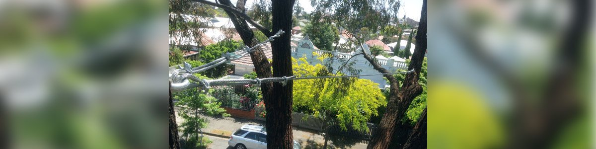 lucas tree services tree cabling