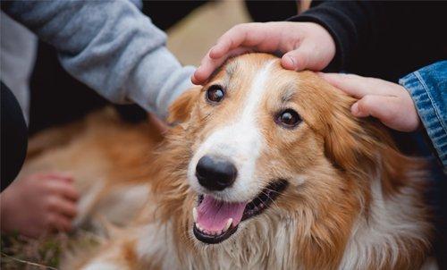 un cane felice che viene coccolato da due persone