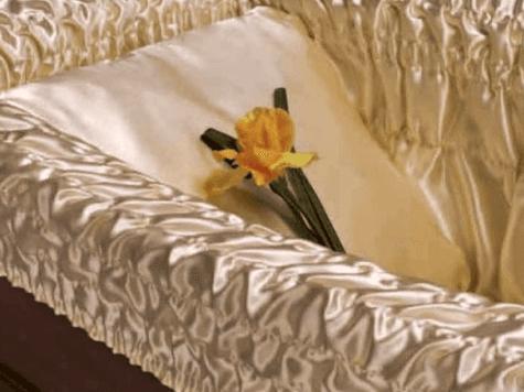 Narciso giallo all'interno del bara