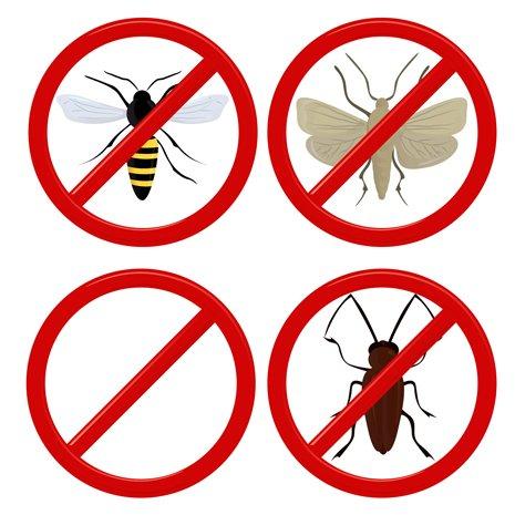 icona insetti