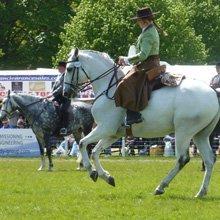 Horse rider training