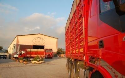 commercio legna biocombustibile