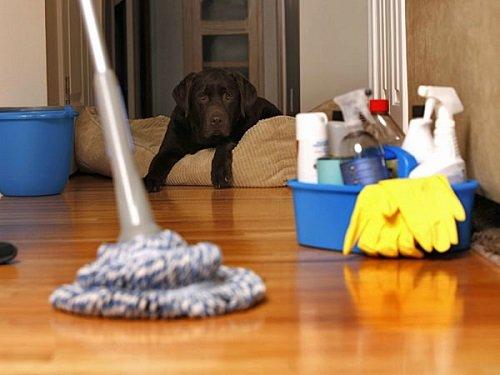 Catino con prodotti di pulizia, un mocio, un cane