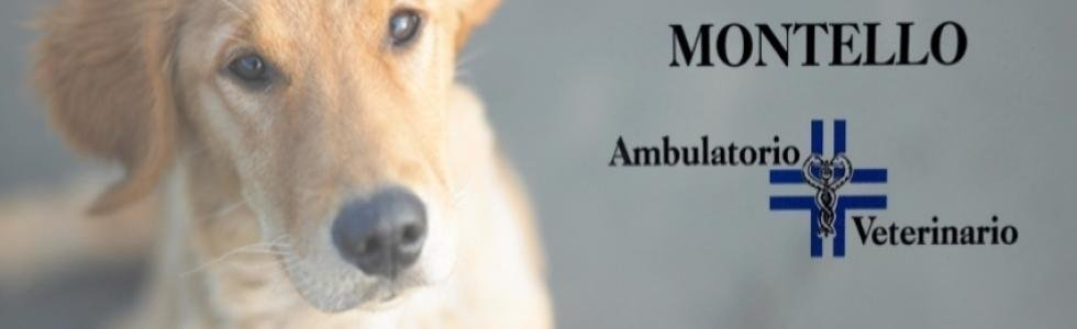 veterinari montebelluna