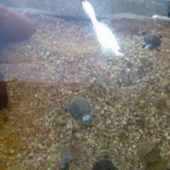 Vendita rettili e conigli domestici varese o d zoo for Rettili domestici
