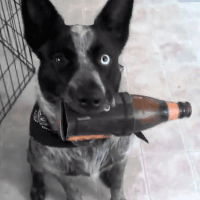 dog with a bottle in mouth