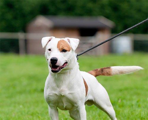 Dog Harmony trainers