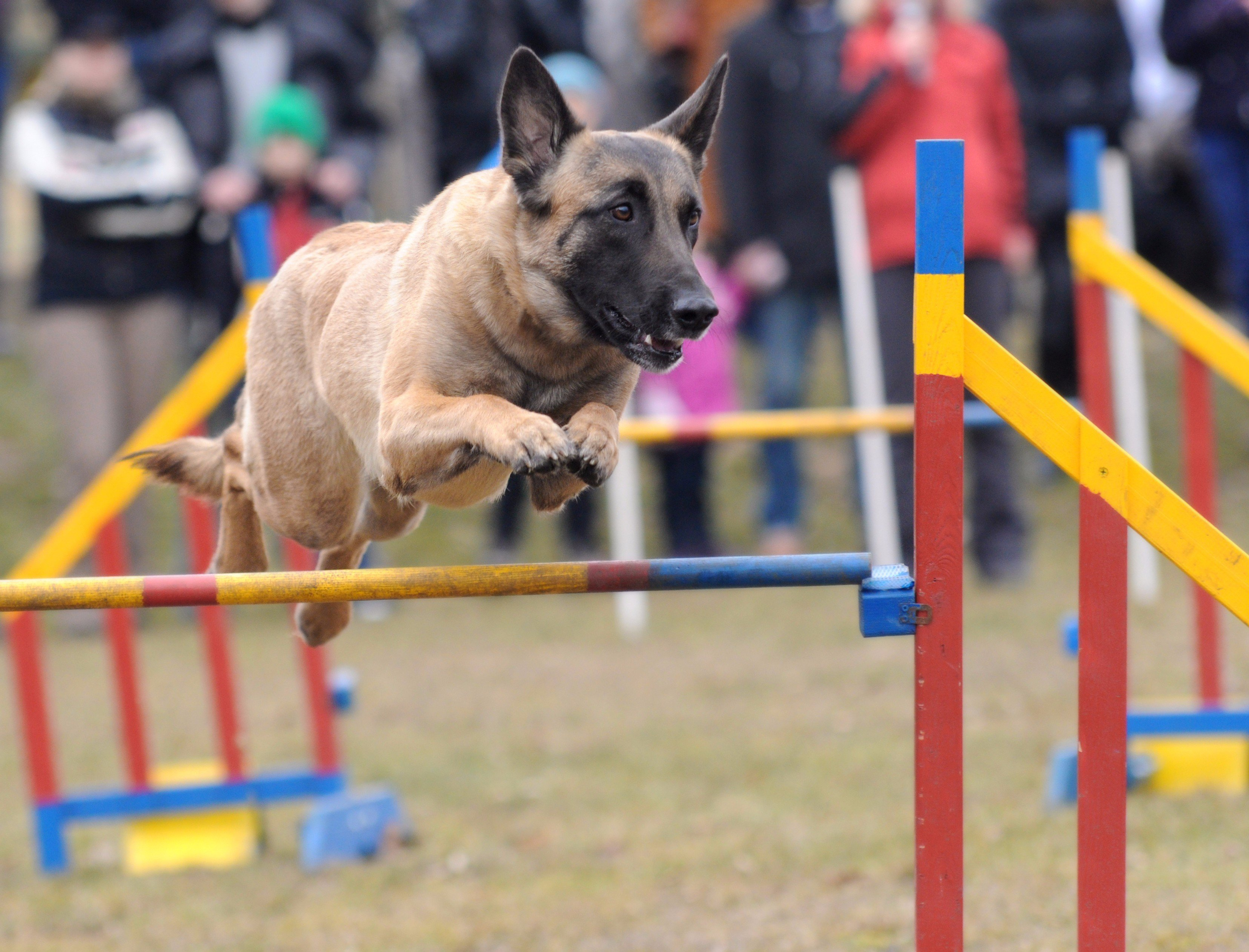 Dog training Wigan, Dog trainer Wigan, Dog Training Ormskirk, Dog Trainer Ormskirk