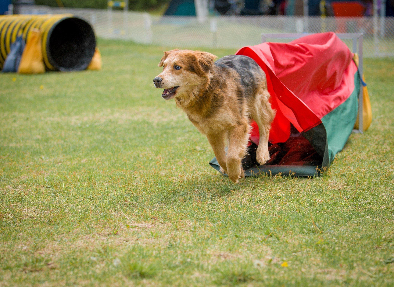 Dog Boarding Skelmersdale